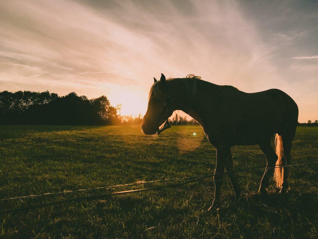 paardrijden activiteiten Domaine du Merlet Zuid Frankrijk