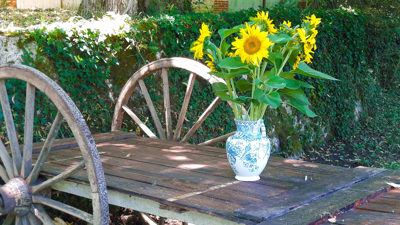 foto zonnebloemen Domaine du Merlet vakantie domein Zuid Frankrijk